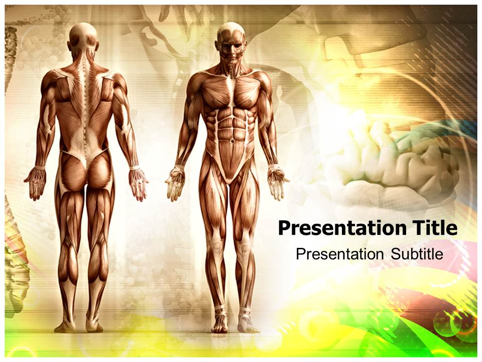 Medical Anatomy And Body Organs Powerpoint Template Ppt