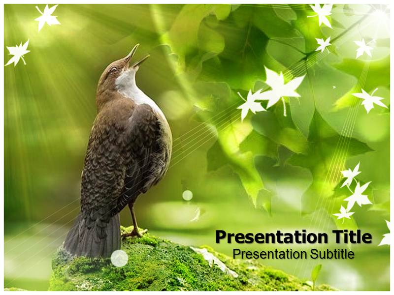 Bird Templates powerpoint templates