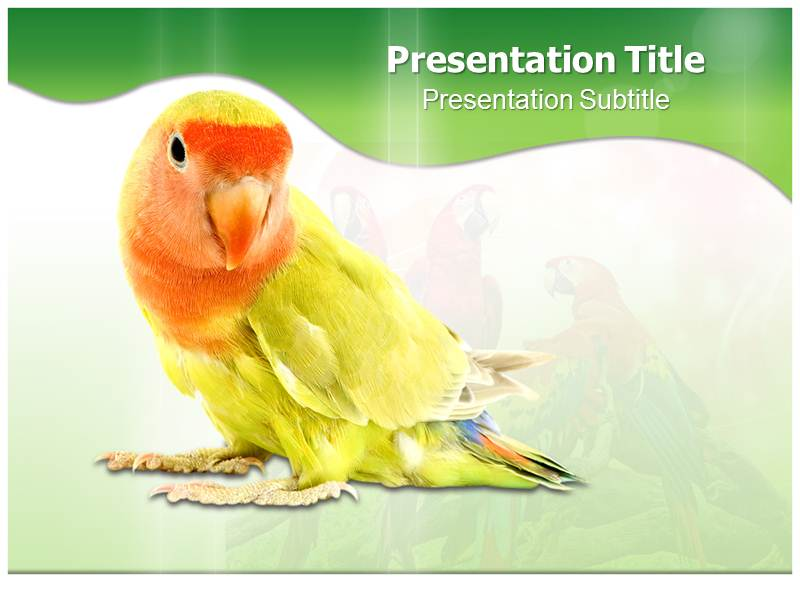 Parrot Templates powerpoint templates