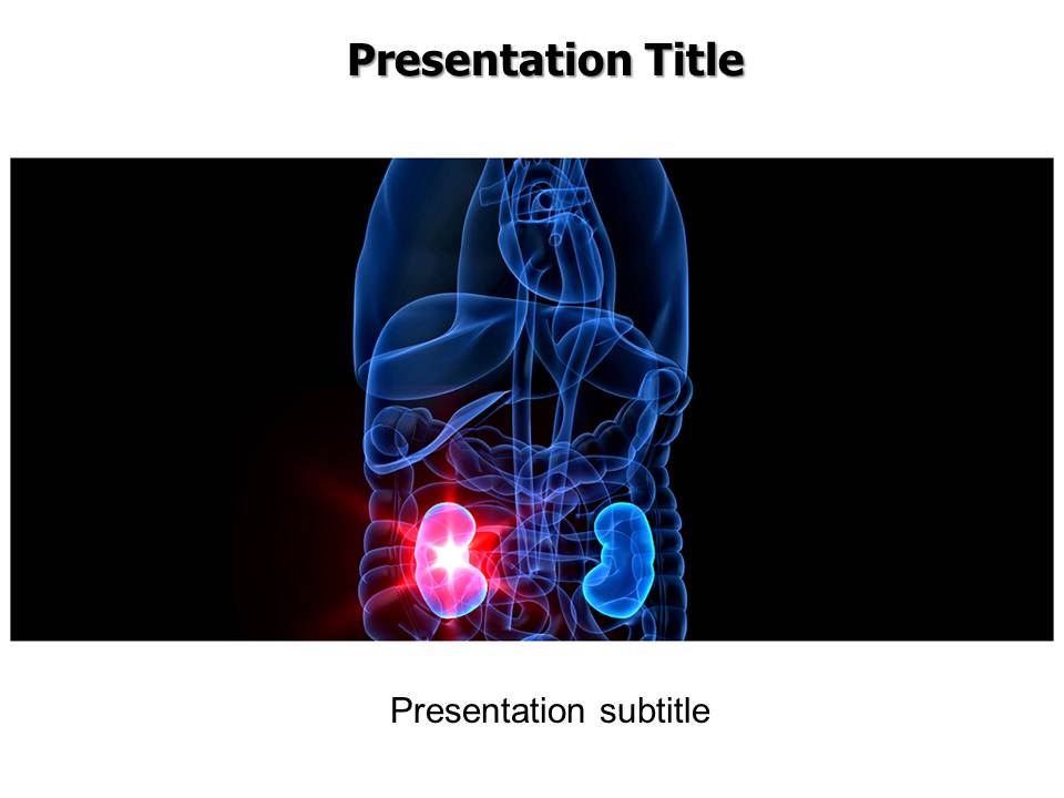 Kidney Medical powerpoint templates