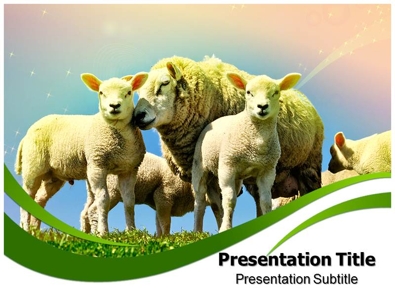 Sheeps Templates powerpoint templates
