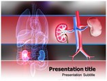 Kidney Stone Medical powerpoint templates