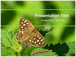 Butterfly And Caterpillar Templates powerpoint templates