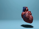 Heart Models  powerpoint templates