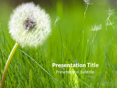 Allergy1 Medical powerpoint templates