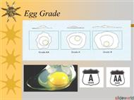 7 Dairy Eggs Breakfast Sandwich  powerpoint presentation