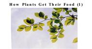How Plants Get Their Food  powerpoint presentation