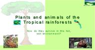 Plants and animals of the Tropical rainforests powerpoint presentation