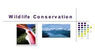 Wildlife Conservation powerpoint presentation