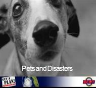 Pets and Disasters powerpoint presentation